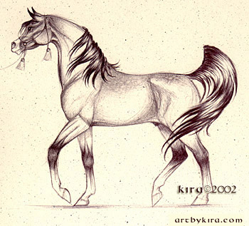 Running arabian horse drawing - photo#26