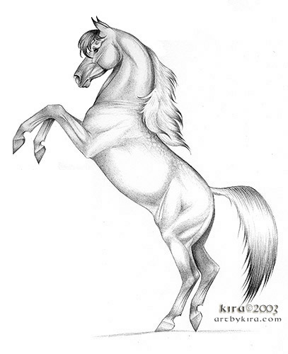 Mustang Horse Images Stock Photos amp Vectors  Shutterstock